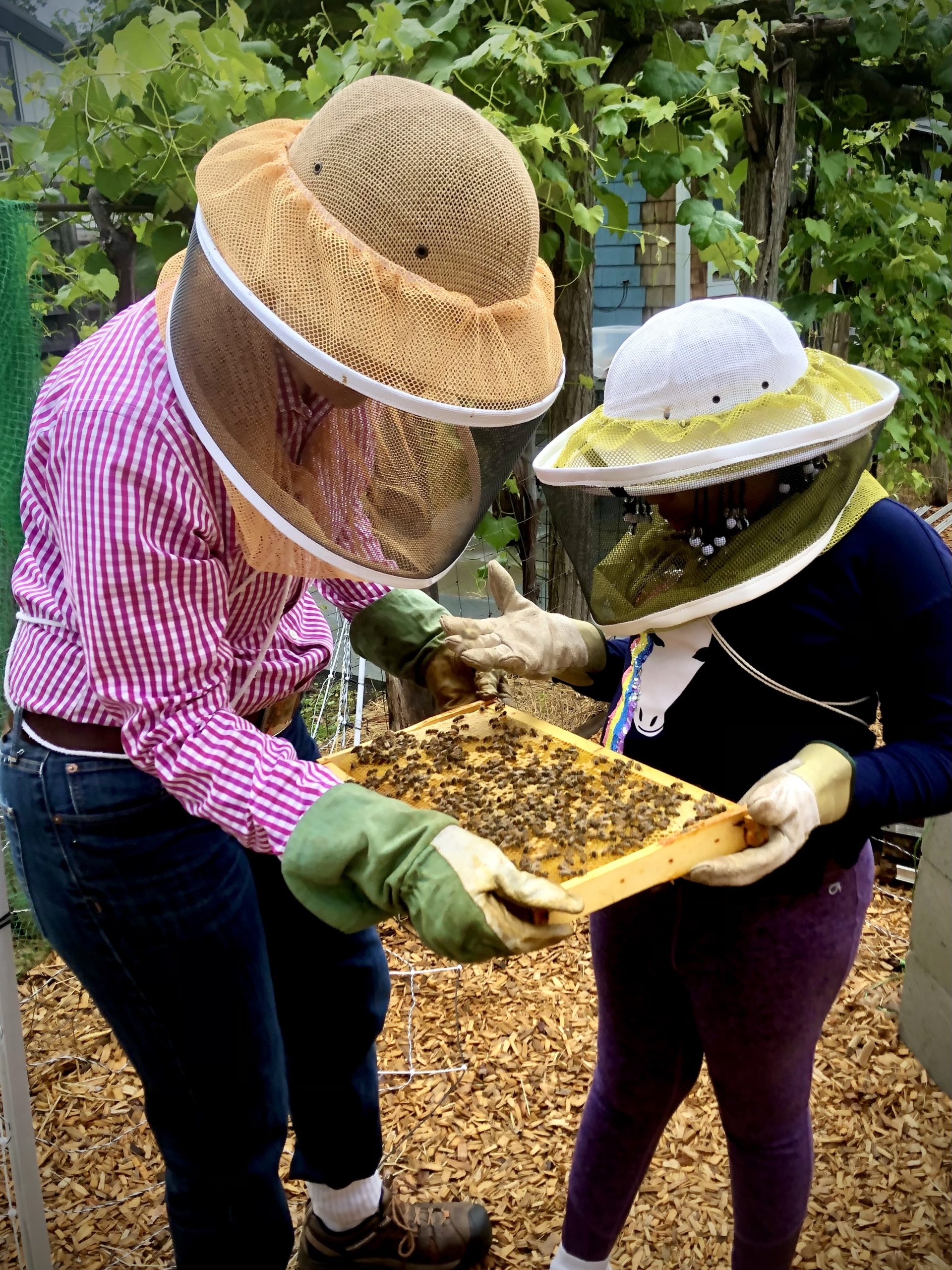 Visitors at the Little Wren Farm apiary inspecting a frame of bees