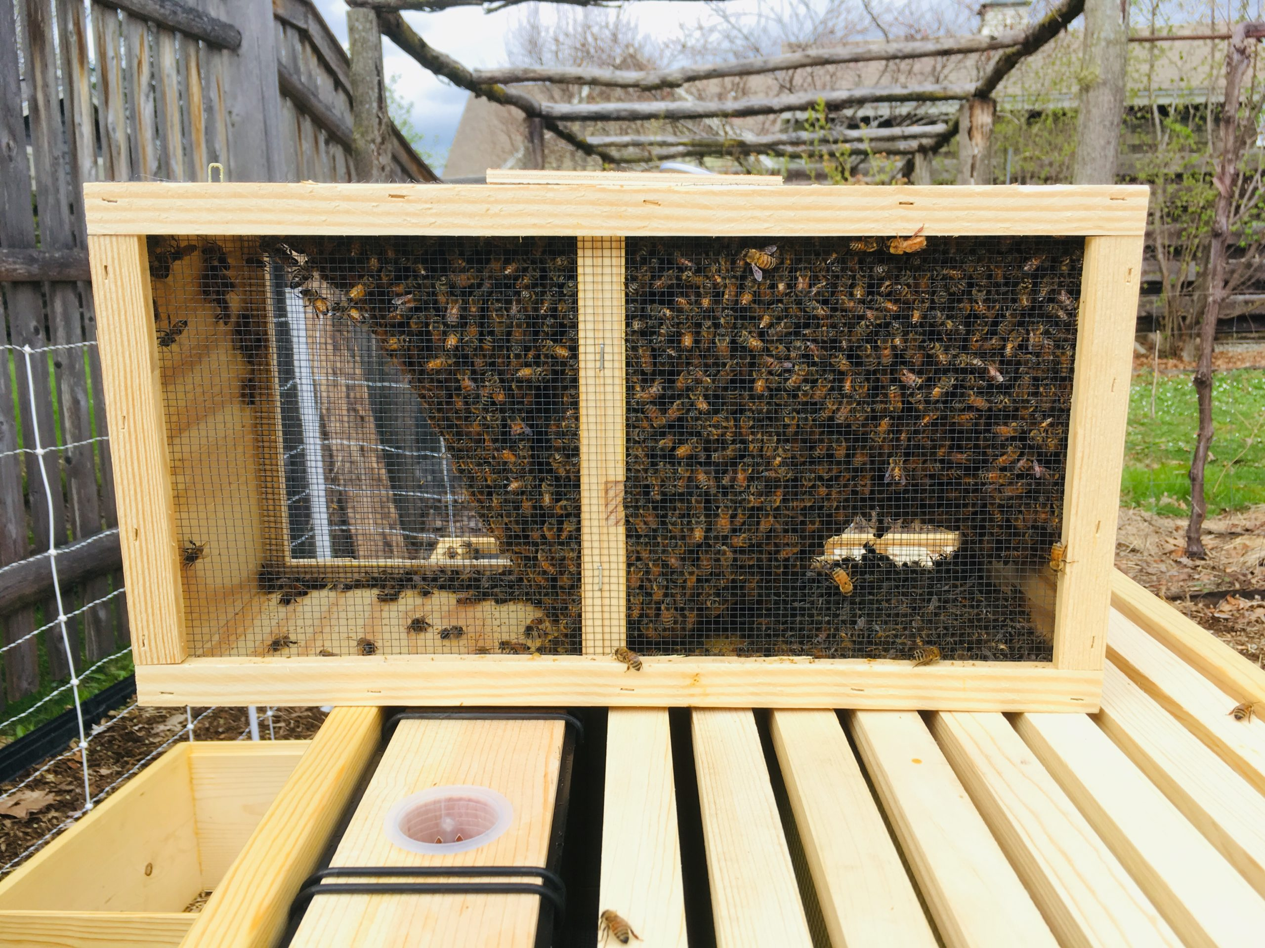 Package of Bees at Little Wren Farm
